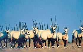 حیوانات و گیاهان امارات