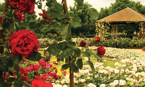 national-rose-gardens