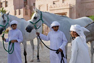 اسب های عربی و شتر سواری