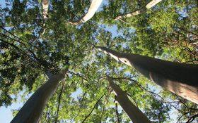 پوشش گیاهی استرالیا